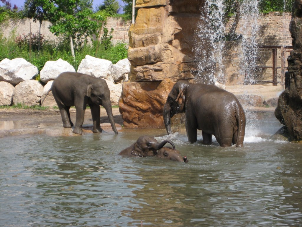 zoo and united kingdom zoos Locate a zoo or aquarium in california:  united states locate a zoo, aquarium, & wildlife park zoos, aquariums, and wildlife parks provide an opportunity for the.