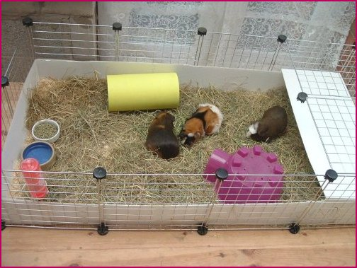 Pin guinea pig cages on pinterest for How to make a cheap guinea pig cage